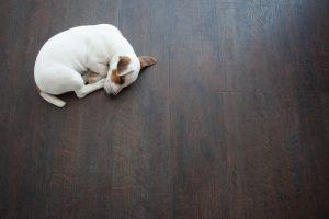čistá podlaha bez bakterií