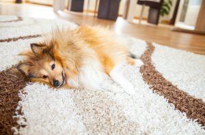 jak vyčistit správně koberec