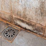 odstranění plísně z koupelny