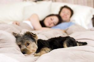 desinfekční čištění matrací