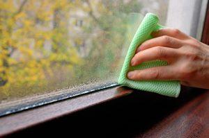Plíseň u okna