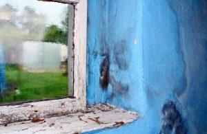 plísně u starých oken