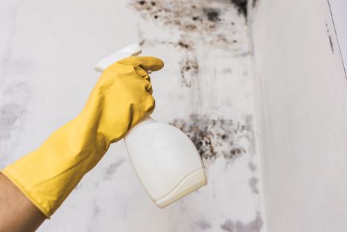 Co když koupíte byt i s plísněmi? Odstranění plísní Praha