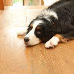 Voskování a lakování podlah