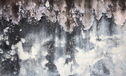 Tipy, ako odstrániť pleseň na stene. Odstránenie plesní Skalica