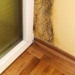 jak odstranit plíseň u oken