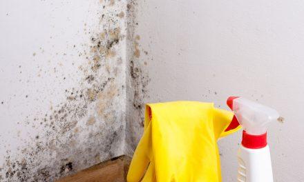 Zbavte se plísní v bytě, dnes už je to jednoduché