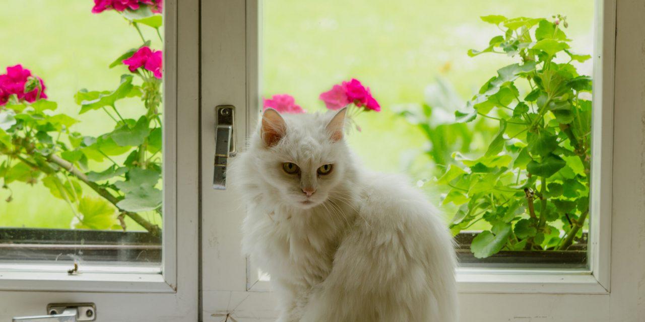 I lesklých a umytých oken jako ze škatulky lze dosáhnout – Mytí okna