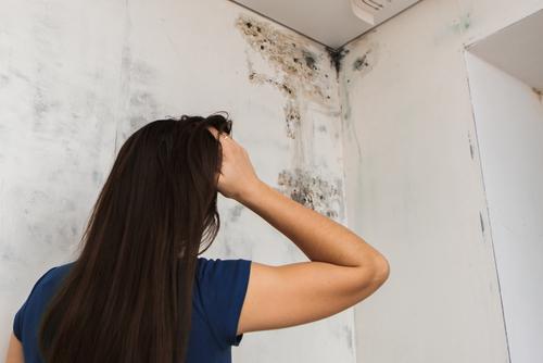 LSG spolehlivě zbaví vaše zdi plísně jednou provždy