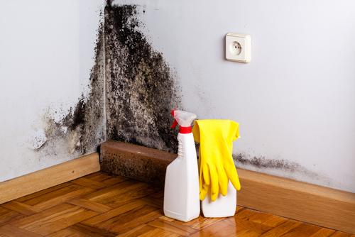 Pleseň na stene - Hľadáte firmu na odstránenie plesne?
