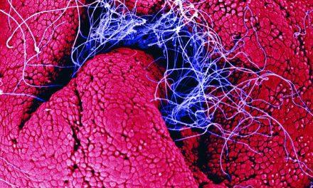 Spermie spolu nezávodí, je to jen další macho mýtus
