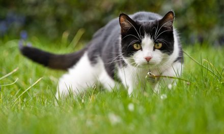New Zealand Village Proposes Banning House Cats to Protect Wildlife