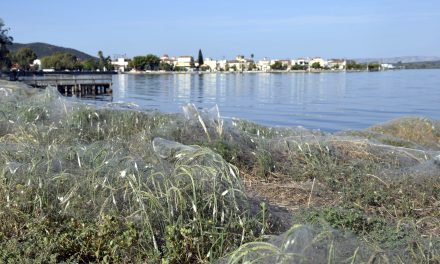 Greek Beach Completely Covered in Giant Spider Webs