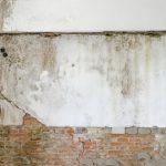 Odstranění plísně v bytě
