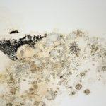 Jak odstranit plíseň pod oknem