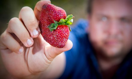 An Australian Woman Was Charged With Hiding Sewing Needles in Strawberries