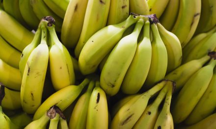 New Zealand Police Found a Record Amount of Cocaine in a Banana Shipment