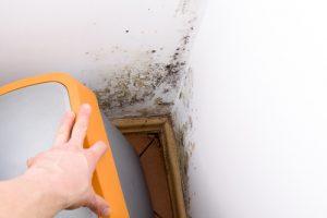 testování čističů proti plísním