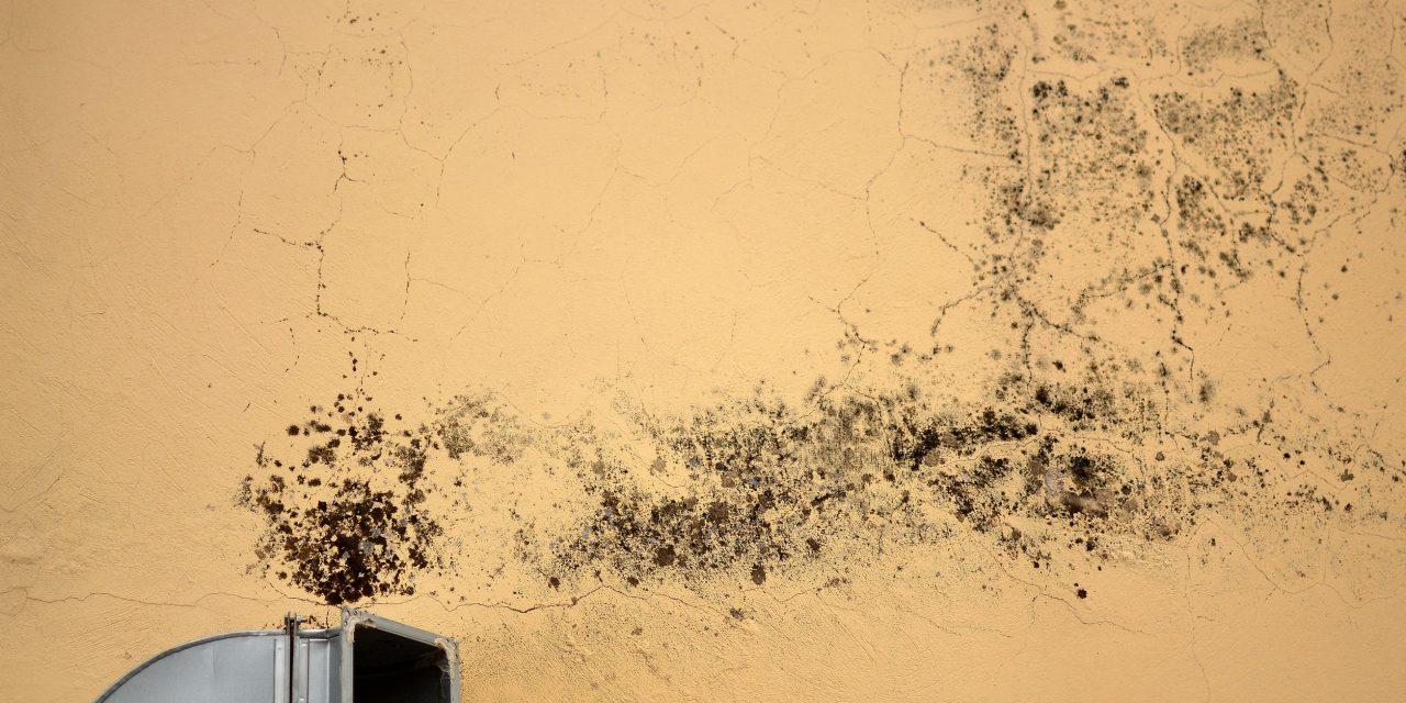 Ve starších domech se vždy tvoří plíseň. Ale naštěstí je způsob, jak se jí zbavit Brno