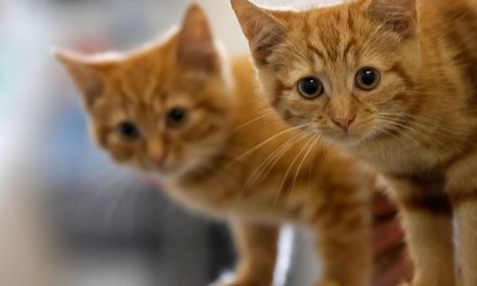 Man Trying to Smuggle Kittens Into Singapore Foiled by Officers Who Heard 'Meowing' From a Bulge in His Pants
