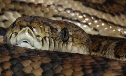 An Australian Woman Was Bitten by a Python While She Was Sitting on the Toilet