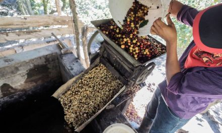 Six in 10 Wild Coffee Species Are Threatened With Extinction, According to Scientists