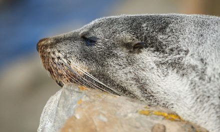 A Memory Stick Loaded With Photos Was Discovered in Frozen Seal Scat