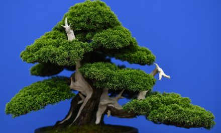 'Are They Being Watered Properly?' Couple in Japan Beg 'Thieves' to Take Care of Their Precious Bonsai Trees