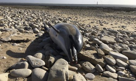 1,100 Mutilated Dolphin Bodies Have Washed Up on France's Beaches