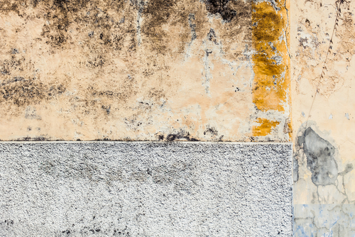 Každá fasáda může byt čistá a bez plísní, jak se bránit proti černé plísni. Proti plísňové fasádní nátěry Brno