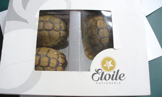 Man Tries to Convince People That Tortoises Are Delicious Cakes for Smuggling Purposes. It Did Not Go Over Well.