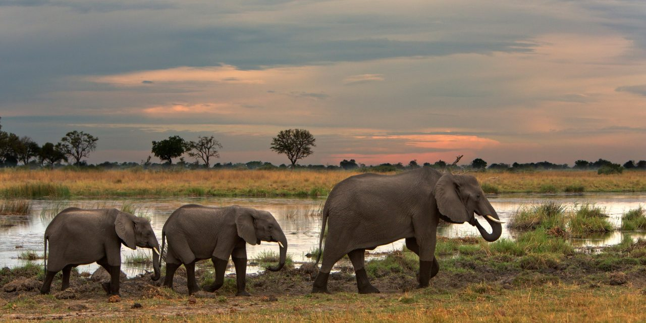 Botswana Just Lifted Its Ban on Elephant Hunting