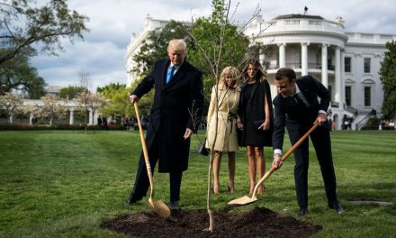 French President Macron Gave President Trump a 'Friendship Tree' Last Year. It Is Now Dead