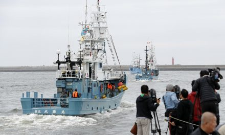 Japan Resumes Commercial Whaling for Now, But Is Expected to Gradually End the Practice