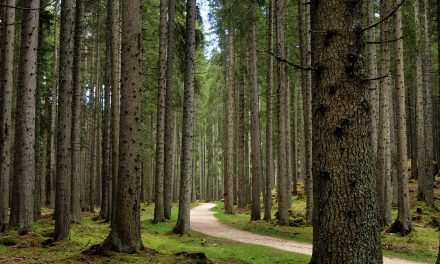 Planting a Trillion Trees May Be the Best Way to Fight Climate Change, Study Says