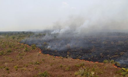 A Record Number of Fires Are Currently Burning Across the Amazon Rainforest