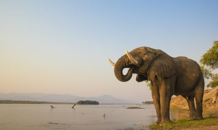 Countries Agree to Limit Sale of Wild Elephants From Zimbabwe and Botswana