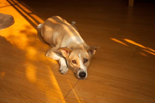 Nevíte si rady s nečistotami na vaší podlaze?