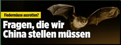 """""""Sollten wir Fledermäuse ausrotten?"""" Nein."""